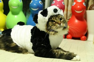 Cat in Panda Costume