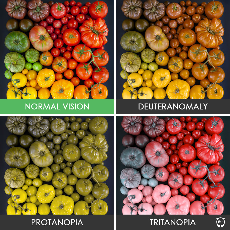 Different Types of Color Blind Vision